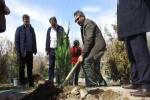 کاشت یک میلیون نهال برای سال ۹۹ در تبریز
